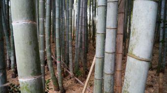 galerie-arashiyama-04