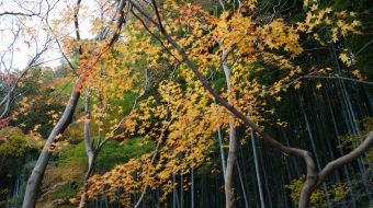 galerie-arashiyama-05