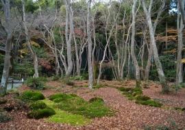 galerie-arashiyama-07