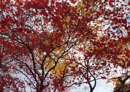 galerie-arashiyama-09