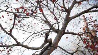 galerie-arashiyama-10