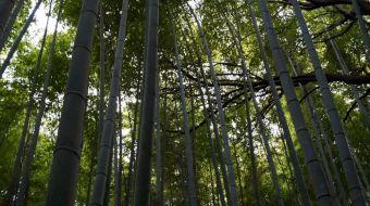 galerie-arashiyama-13