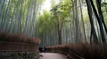 galerie-arashiyama-14