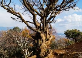 galerie-arashiyama-28