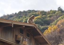 galerie-arashiyama-30