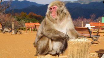 galerie-arashiyama-31