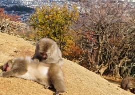 galerie-arashiyama-32