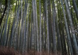 galerie-arashiyama-15