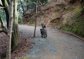 galerie-arashiyama-27