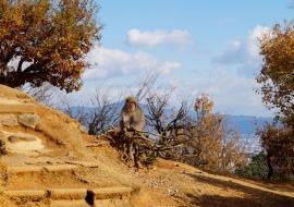 galerie-arashiyama-35