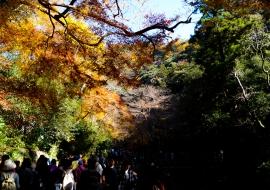 gallery-minoo-park-14