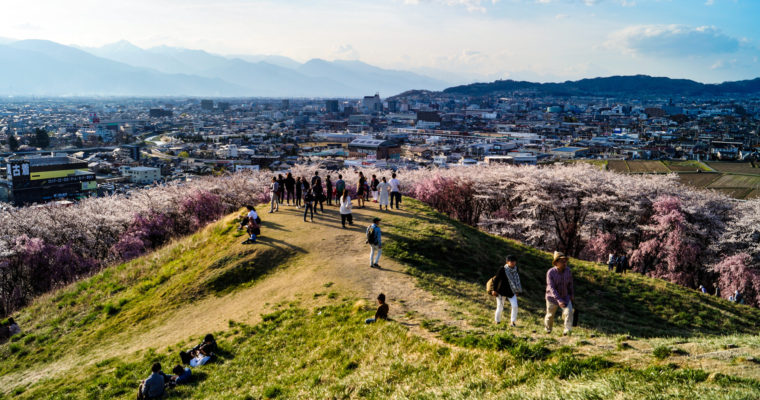 Où admirer les Sakura à Matsumoto?