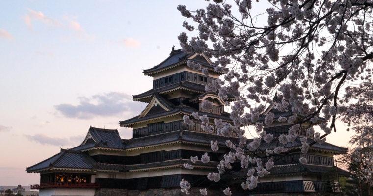 Sakura au Château de Matsumoto 松本城