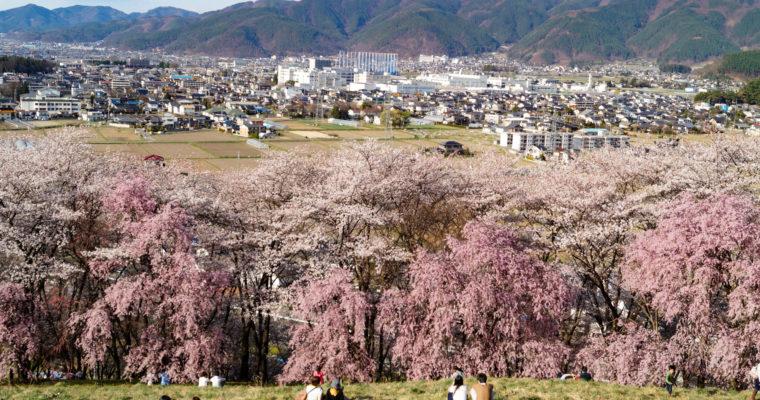 Kôbôyama 弘法山, la montagne aux Sakura de Matsumoto