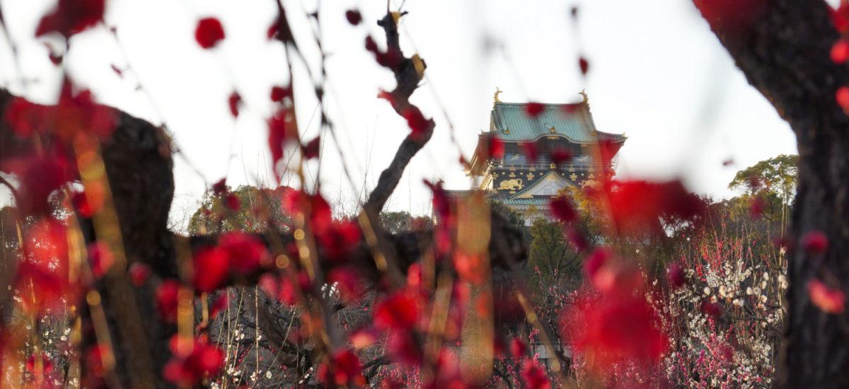 Galerie Photo : Le château d'Ôsaka au cours de l'année