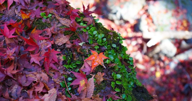 Galerie Photo : Couleurs d'automne au Minoo Park