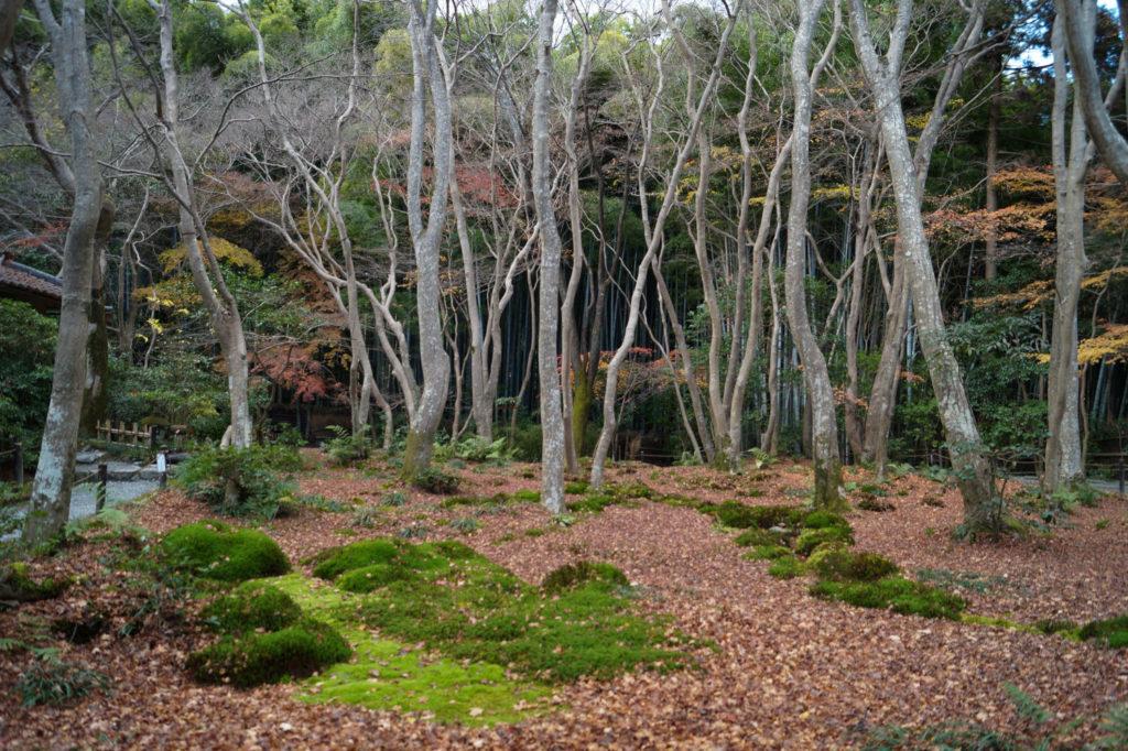 arashiyama giôji