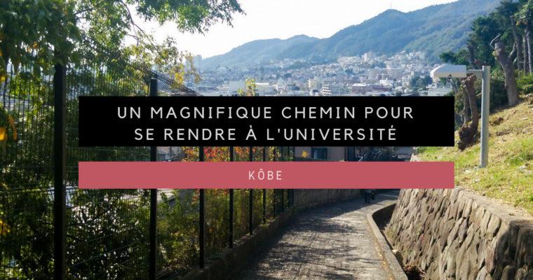 <h1>[Kôbe] Un magnifique chemin pour se rendre à l'Université</h1>